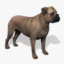 Bull mastiff 3D models