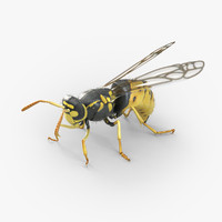 3d wasp bugs
