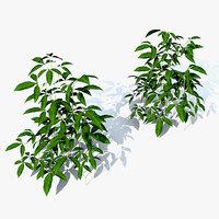 Seedlings Passionflower