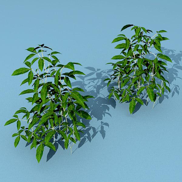 cinema4d plants