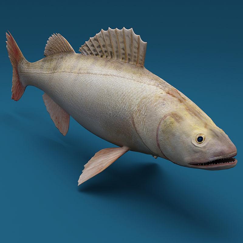 3d model ruff fish