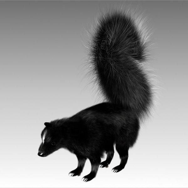 3dsmax white stripes skunk