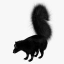 skunk 3D models