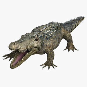 crocodiles alligator animal 3d model