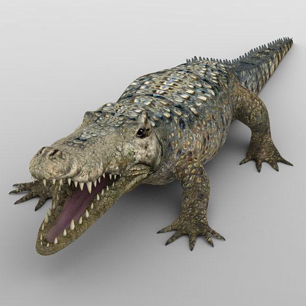 crocodiles alligator animal 3d model