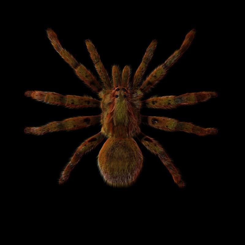3d spider normal animation model