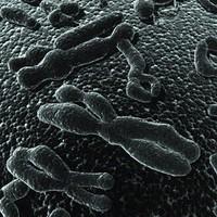 Chromosomes HD