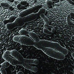 3d model chromosomes human shape