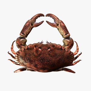 crab zbrush 3d model