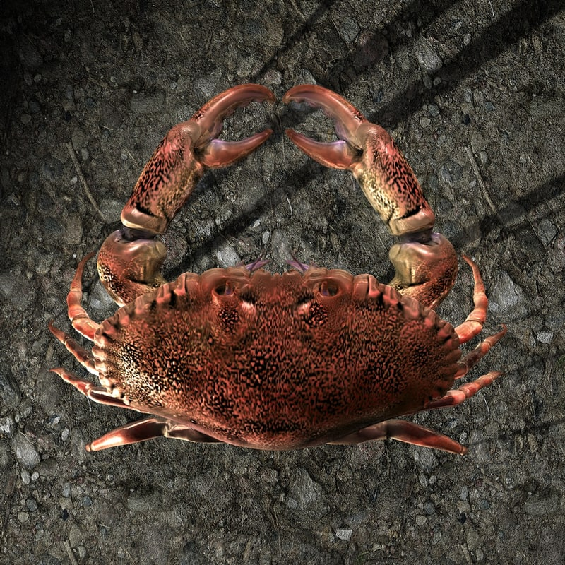 crab zbrush 3d model