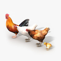 Chicken Family