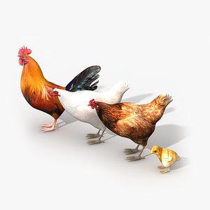 3d model chicken family