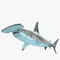 shark modeled 3d model