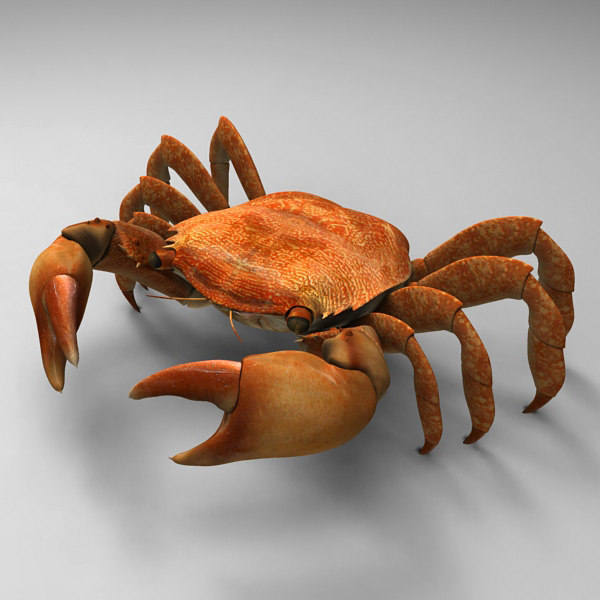crab cheetah3d max