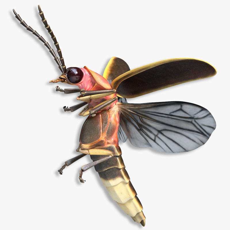 max firefly bug flying pose