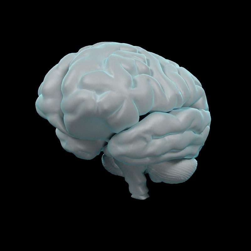 3dsmax Human Brain