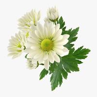 flower chrysanthemum 3d obj