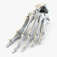 human bone foot 3d model