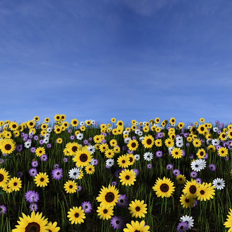 field flowers 3d obj