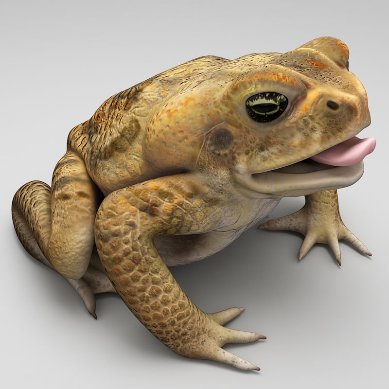 max frog cane toad