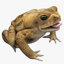 toad 3D models
