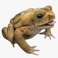 Frog Cane Toad