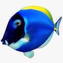 surgeon fish 3D models