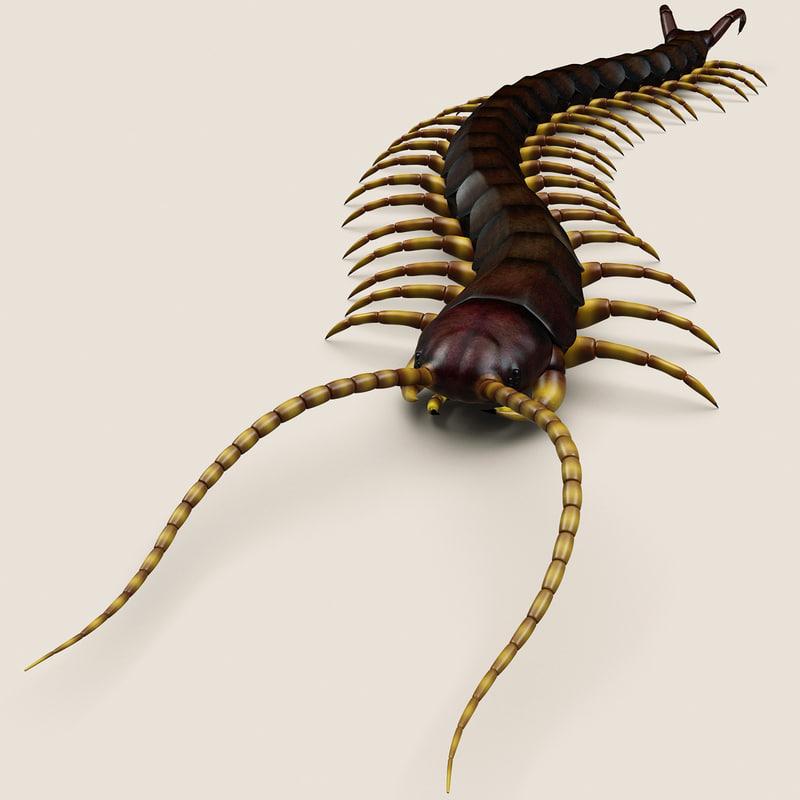3d model of centipede modelled