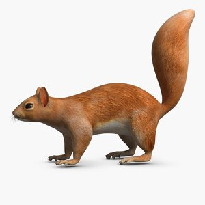 3d squirrel modeled