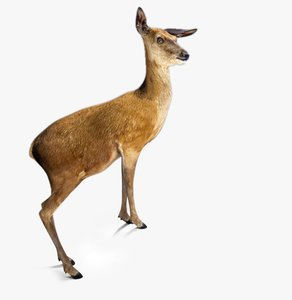 rigged deer fbx