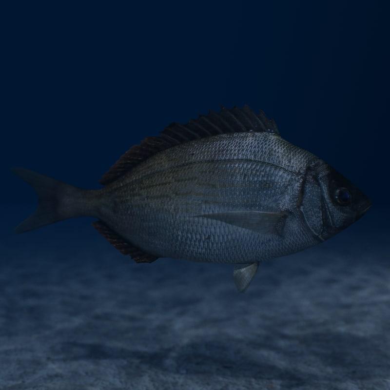 bream sea fish 3d model