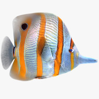 3d buterfly tropical fish model