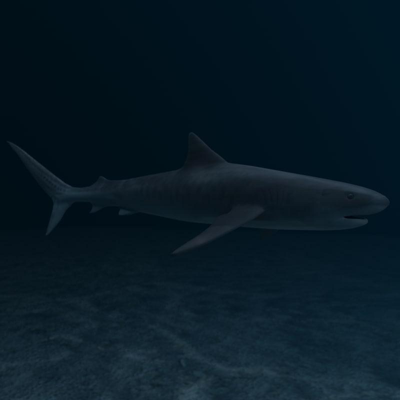 max tiger shark