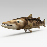 3d model barracuda fish