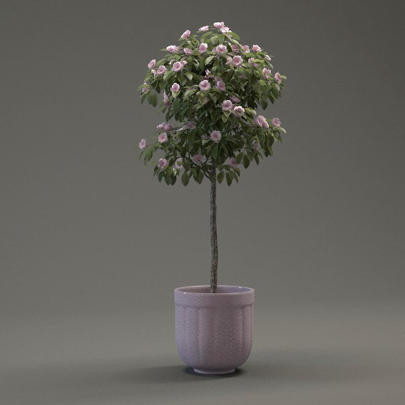 3d model small ornamental - tree