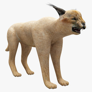 3d model caracal modeled