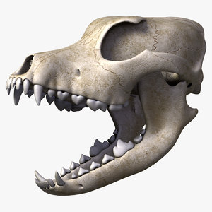 realistic dog skull 3d model