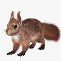 3d hair squirrel model