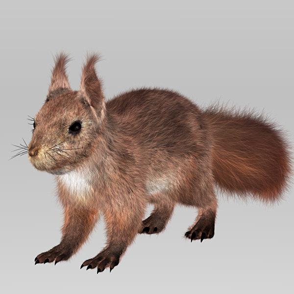 3d hair squirrel model