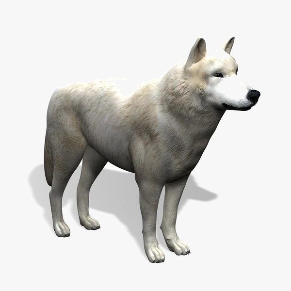 3d model arctic wolf