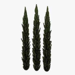 italian cypress 3d model