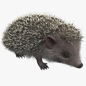 hedgehog modelled 3d model