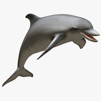 dolphin animations blowhole c4d