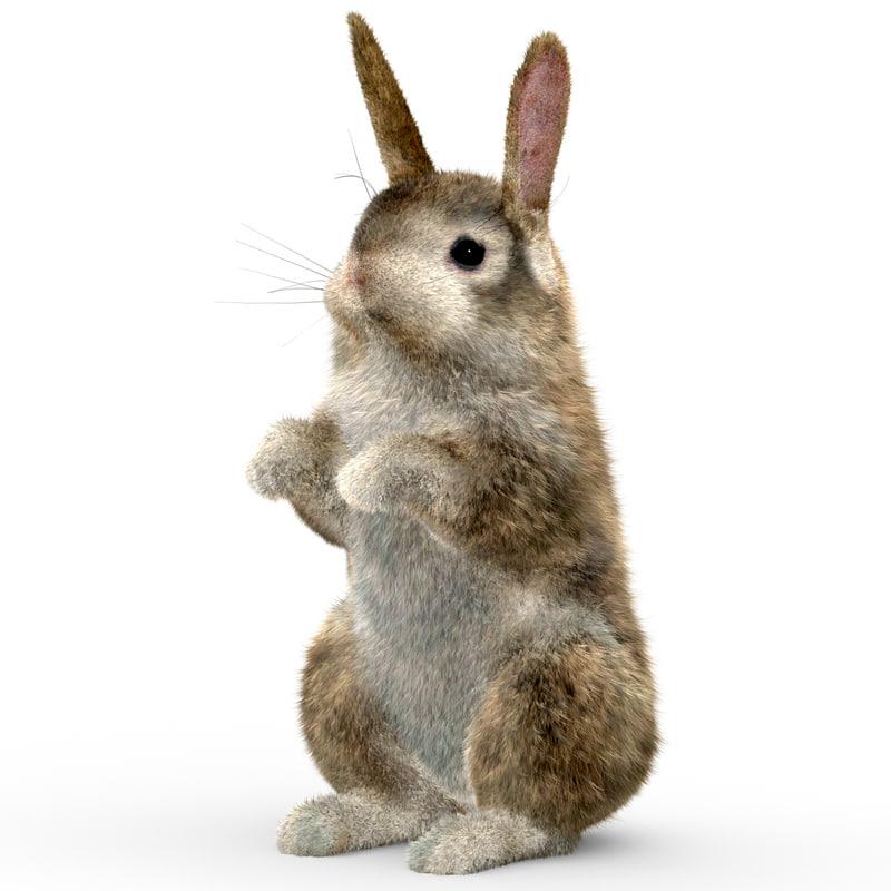 rabbit 2 fur 3d model