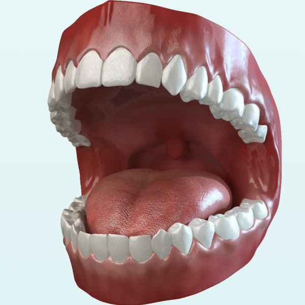 mouth teeth tongue animation 3d max