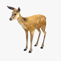 maya deer doe animate