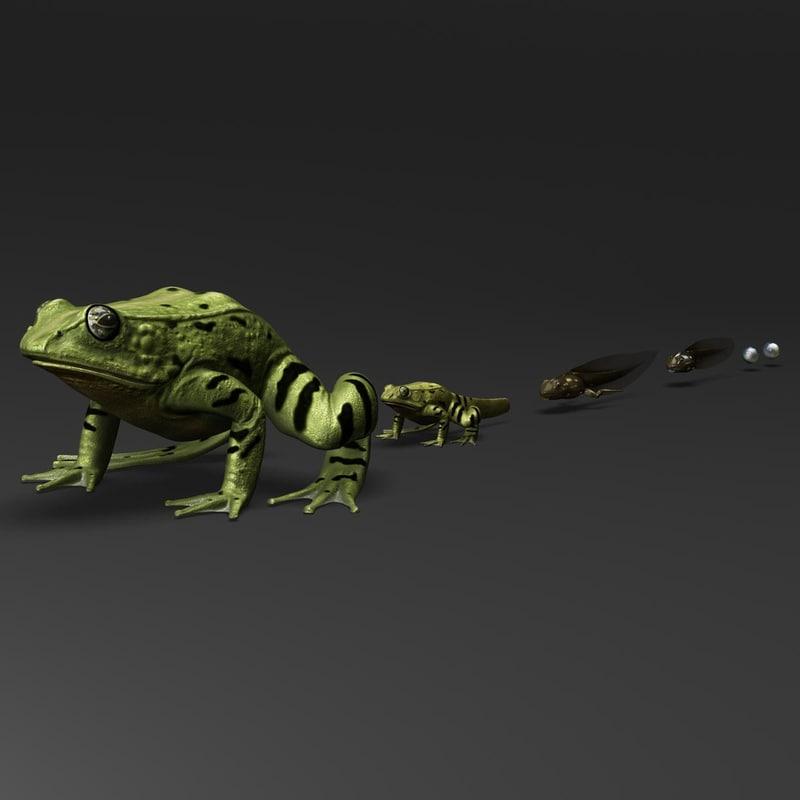 frog evolution max
