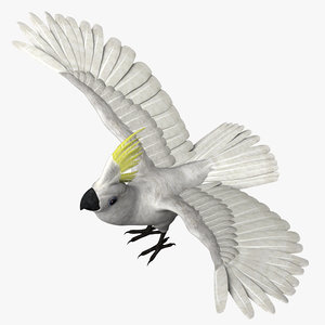 cockatoo bird 3d model