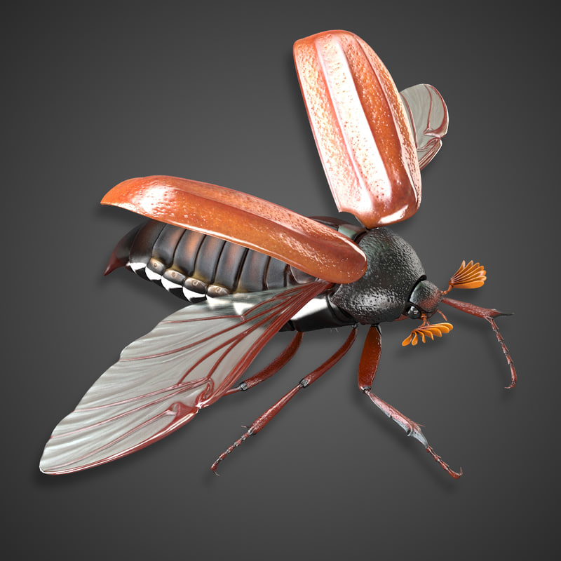 bug wings modeled max