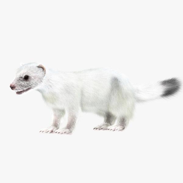 white ermine 3d max